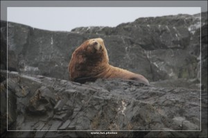 Whale Watching Tour Tofino